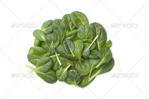 Fino Fresco Italian lettuce - Stock Photo - Images