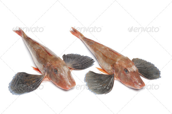 Red tub gurnard fishes - Stock Photo - Images