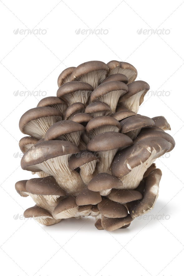 Group of Common oyster mushrooms - Stock Photo - Images