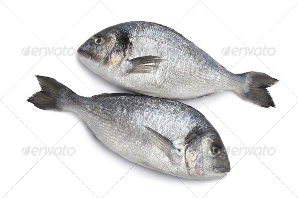 Gilt head breams fishes - Stock Photo - Images