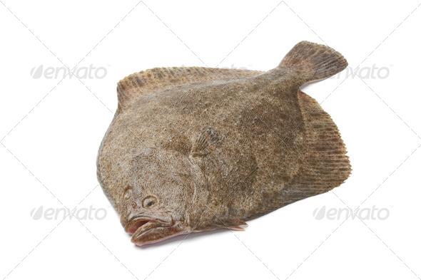 Whole single fresh Turbot fish - Stock Photo - Images