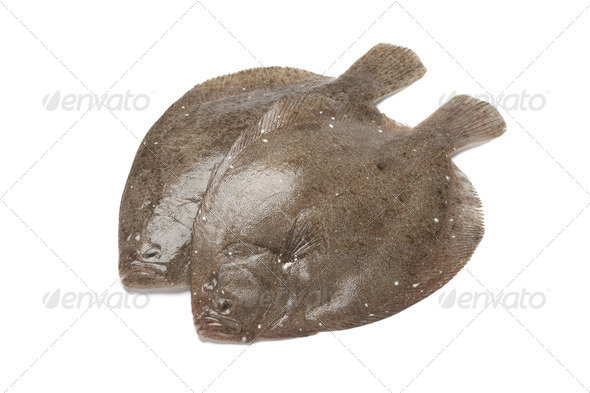 Pair of fresh brill fishes - Stock Photo - Images