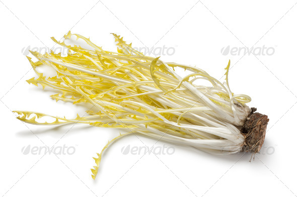 Yellow dandelion leaves - Stock Photo - Images