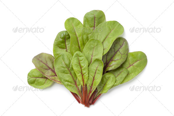 Red veined sorel leaves - Stock Photo - Images