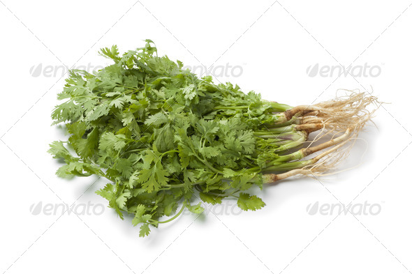 Fresh cilantro with roots - Stock Photo - Images