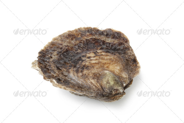 Single closed fresh European flat oyster - Stock Photo - Images
