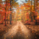 Dirt road in autumn forest in fog. Red foggy forest - PhotoDune Item for Sale