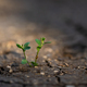 Green plant growing from crackling earth in sunlit - PhotoDune Item for Sale