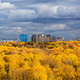 yellow forest, modern high-rise houses on horizon - PhotoDune Item for Sale