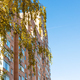 yellow leaves and high-rise apartment house - PhotoDune Item for Sale