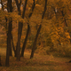 Autumn landscape, cloudy rainy foggy day in the park, selective focus - PhotoDune Item for Sale
