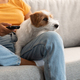 Sweet jack russel dog watching TV with its female owner - PhotoDune Item for Sale