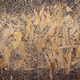 Wooden osb  background texture.  Wood tabletop top view with copy space - PhotoDune Item for Sale