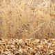 Wood shavings on table background. Wooden shaving at old plank board - PhotoDune Item for Sale