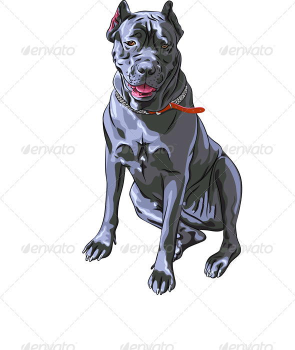 Dog Black Cane Corso Italian breed  - Animals Characters