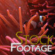 """Fishes 20"" Stock Footage in Full HD 1920x1080 - VideoHive Item for Sale"