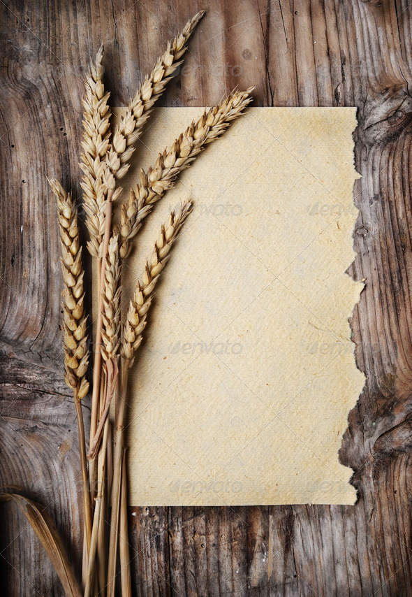Wheat Ears - Stock Photo - Images