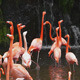 Pink Flamingos - VideoHive Item for Sale