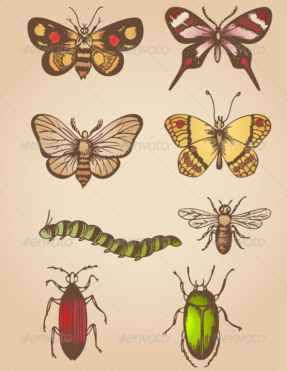 Vintage Insects - Animals Characters