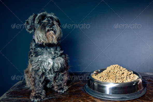 Too much food for me - Stock Photo - Images
