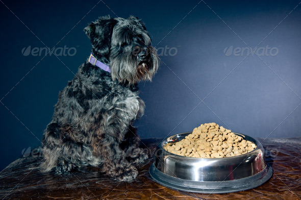 Too much food - Stock Photo - Images