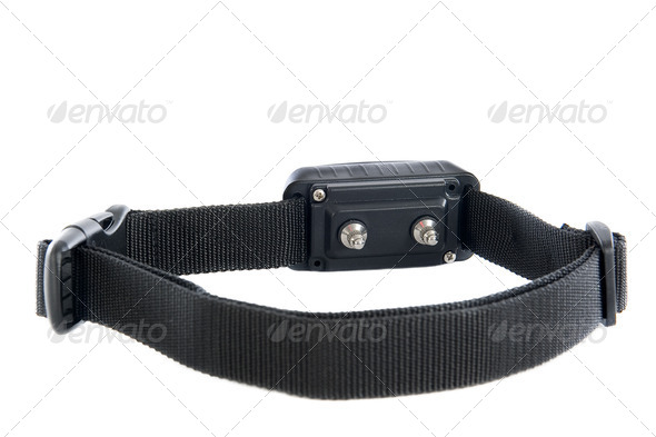 electronic collar - Stock Photo - Images