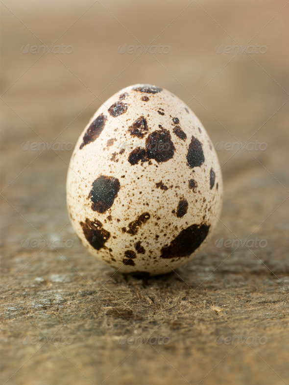 Quails Egg - Stock Photo - Images
