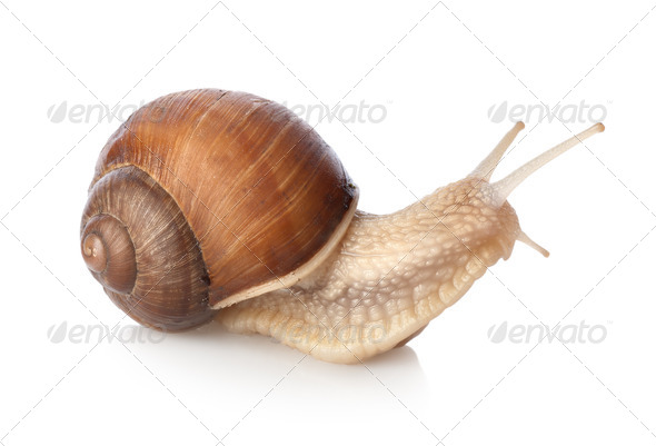 Snail - Stock Photo - Images