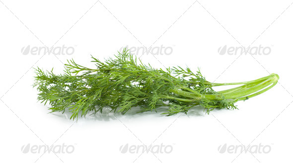 A branch of dill - Stock Photo - Images