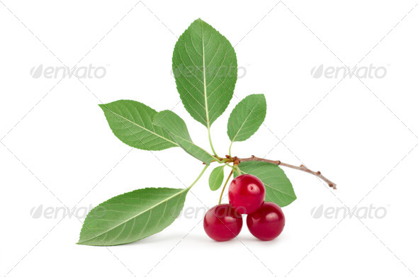 Three ripe cherries isolated - Stock Photo - Images