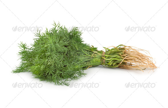 Fresh green dill - Stock Photo - Images