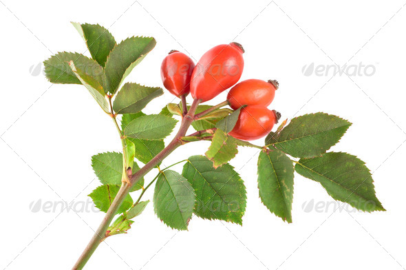 Rose hip - Stock Photo - Images