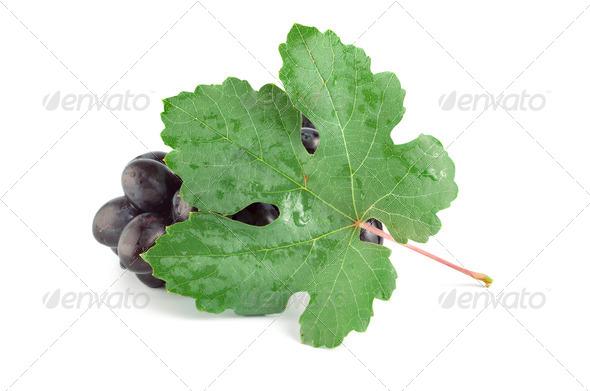 Ripe blue grape - Stock Photo - Images
