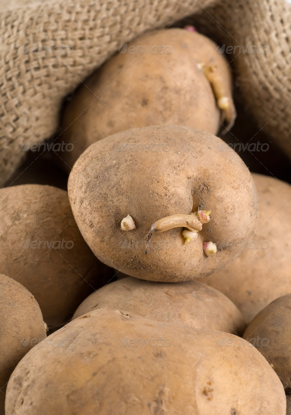 Old potatoes in a bag - Stock Photo - Images