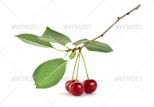Cherry - Stock Photo - Images