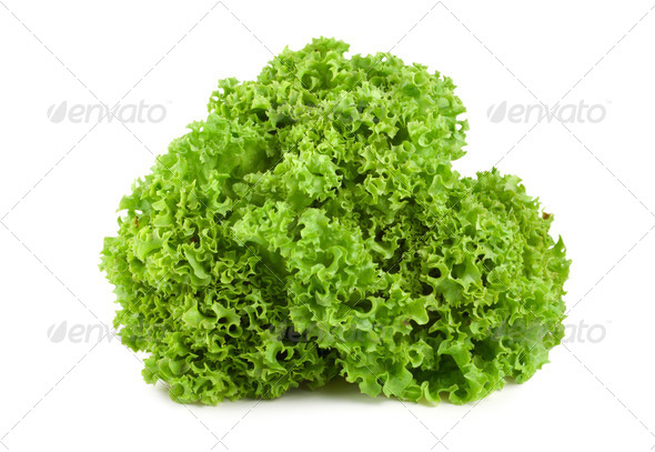 Bush lettuce isolated - Stock Photo - Images