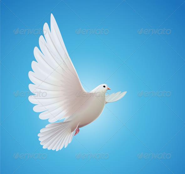 White dove - Animals Characters