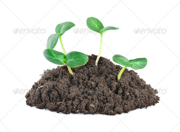 Young green plants - Stock Photo - Images
