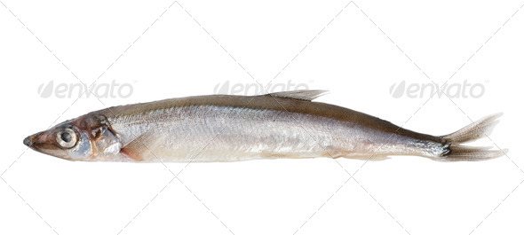 Raw capelin (Path) - Stock Photo - Images