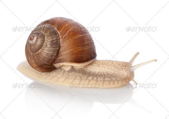 Crawling snail - Stock Photo - Images