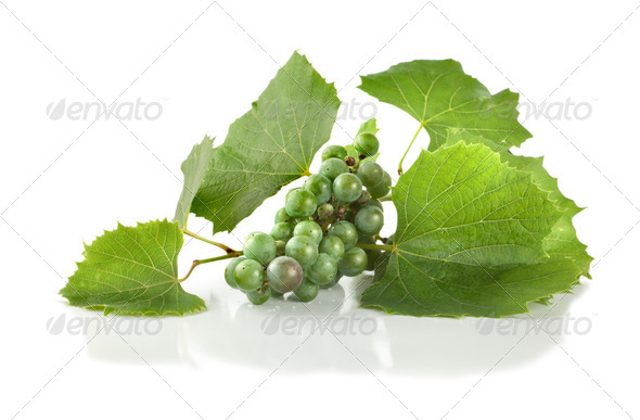 Grape isolated - Stock Photo - Images