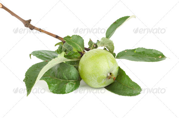 Branch of apple - Stock Photo - Images