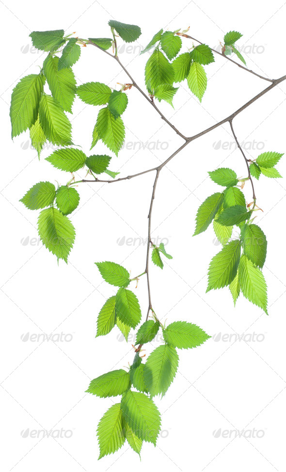 Tree branch - Stock Photo - Images