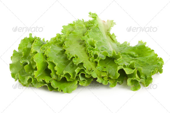 Leaves lettuce - Stock Photo - Images
