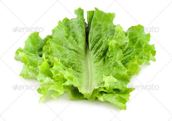 Fresh lettuce - Stock Photo - Images