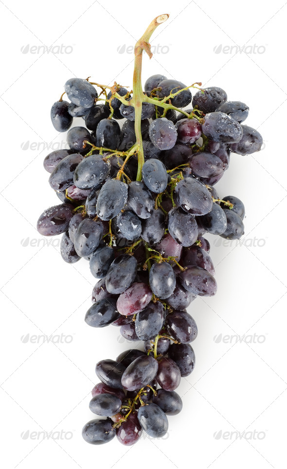 Bunch of blue grapes - Stock Photo - Images