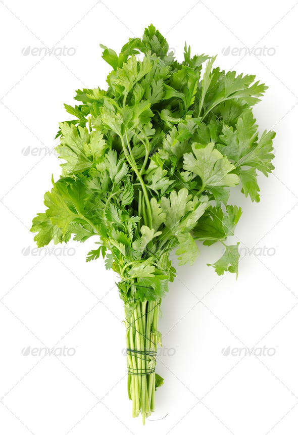 Parsley Isolated - Stock Photo - Images