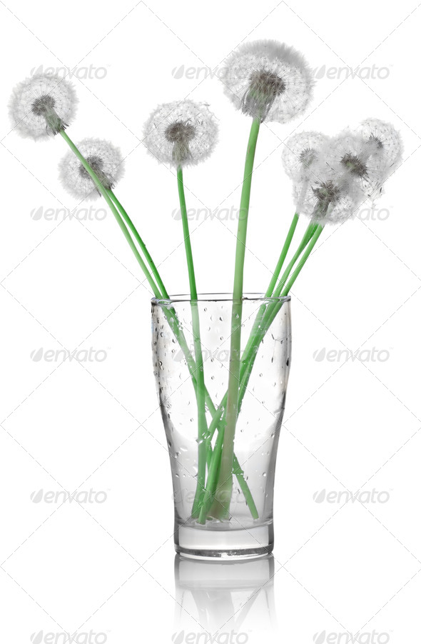 Dandelions in a glass - Stock Photo - Images