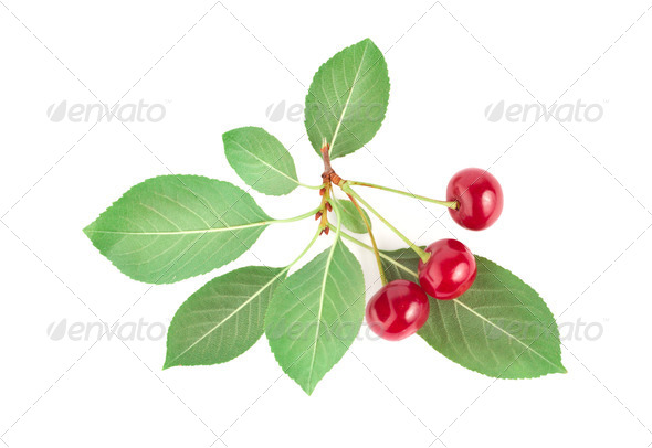 Three ripe cherries - Stock Photo - Images