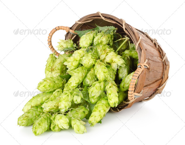 Hops in a wooden basket - Stock Photo - Images